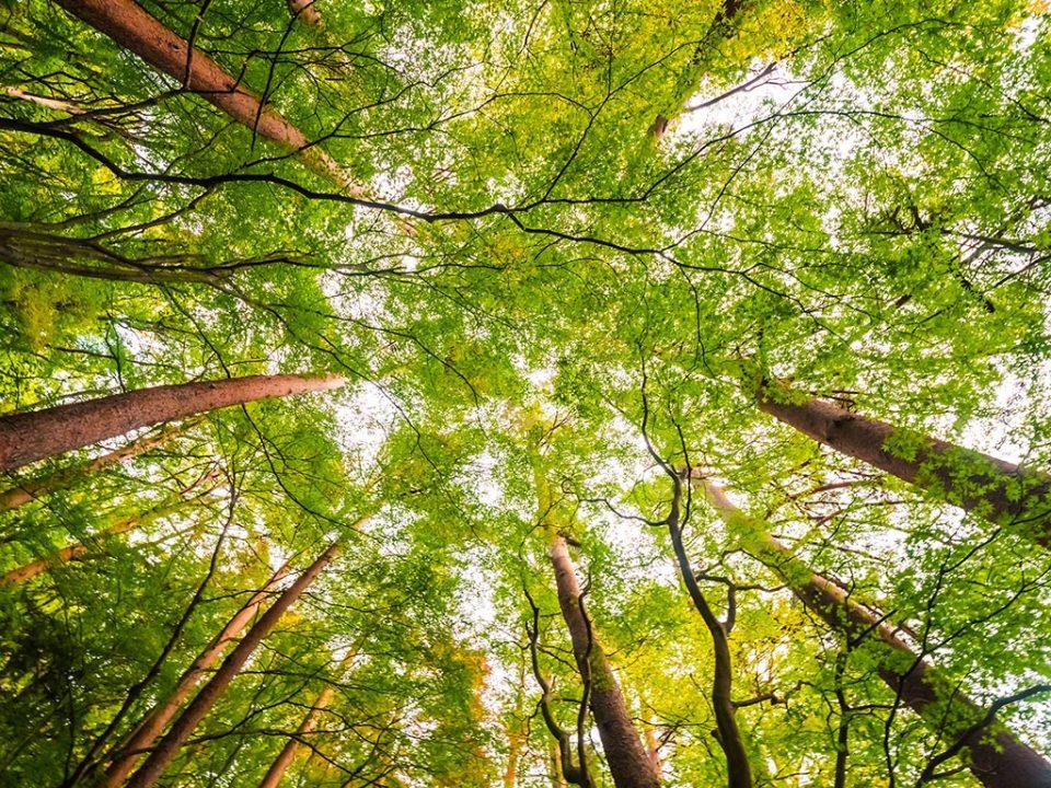 Estudios de Impacto Medioambiental GEOTEC